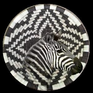 Forehead of the Zebra