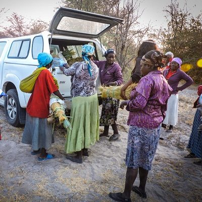 Arts for Africa - aided harvesting trip